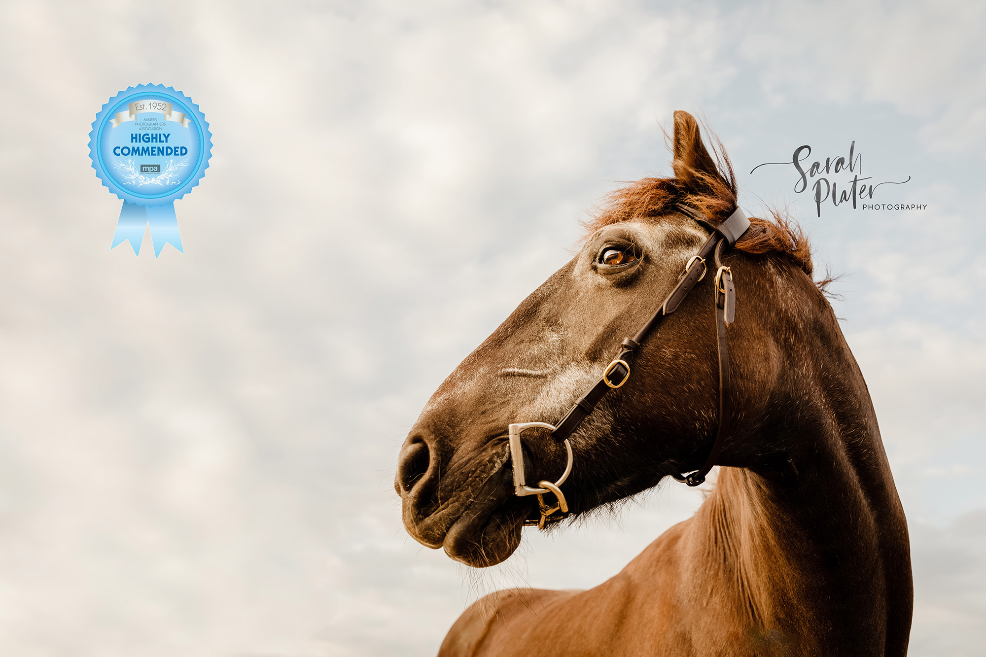 Horse Portraits Of 21 Year Old Malibu Equine Photography Sarahplater Com